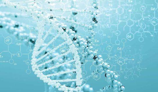 Scientists Reveal Homo Sapiens' Secret of Success